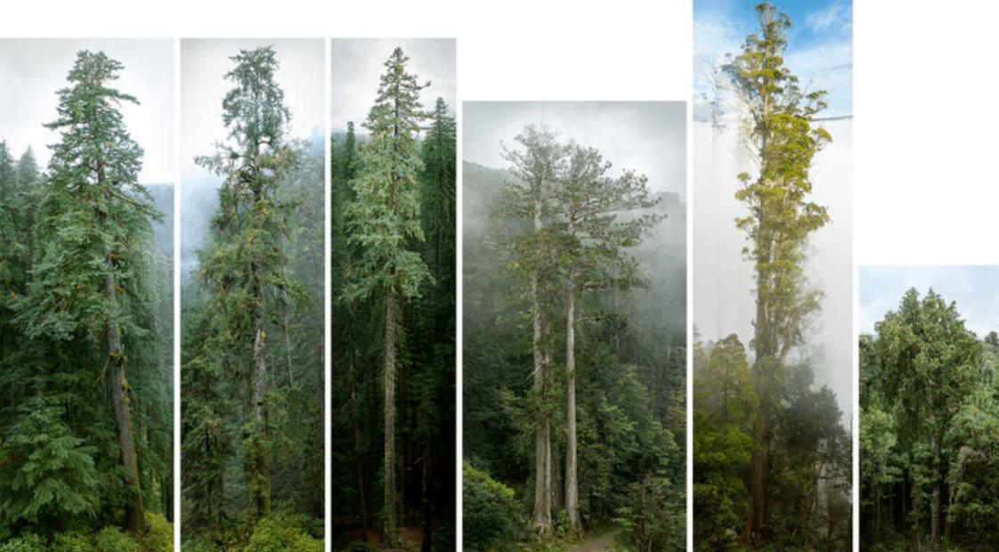 a legnagyobb fák portéi